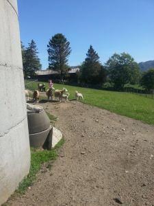 Jan-Arne's Sheep 2